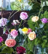 februari_roos_koningin_der_bloemen_2