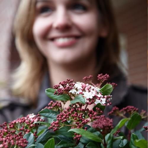 20141001_tuinplant_vd_maand_oktober_viburnum - kopie
