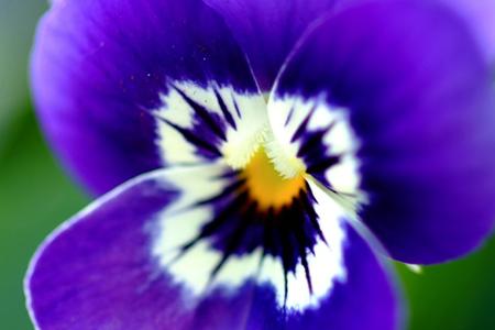 hallo_lente_tuinieren_viool