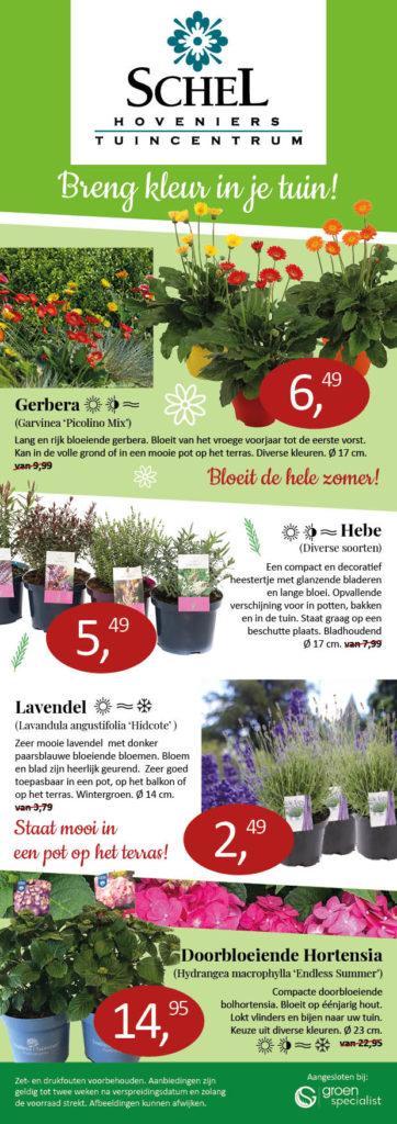 planten aanbieding Tuincentrum Schel
