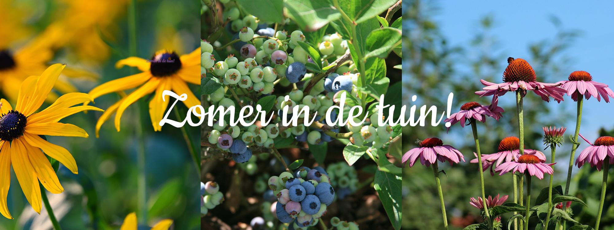 zomer in de tuin met tuincentrum schel